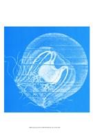 Saturated Sealife IV Fine-Art Print