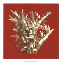 Coral on Red I Fine-Art Print