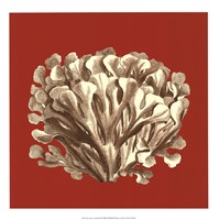 Coral on Red III Fine-Art Print