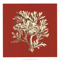 Coral on Red IV Fine-Art Print
