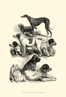 International Show Dogs, 1863  II Fine-Art Print