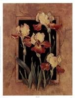 Framed Iris Fine-Art Print