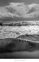 Shorebirds, Point Reyes Fine-Art Print