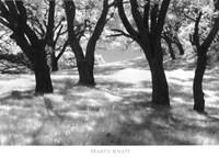 Blue Oaks Fine-Art Print
