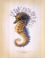 Shorthead Seahorse Fine-Art Print