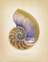 Nautilus Cross Section Framed Print