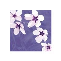 Blossom #1 Fine-Art Print