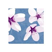 Blossom #2 Fine-Art Print