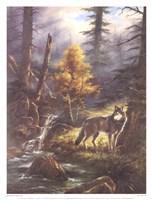 Timber Wolf Fine-Art Print