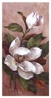 Magnolia Accents ll Fine-Art Print