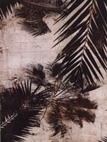 Palms I Fine-Art Print
