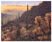 Sonoran Sunset Fine-Art Print