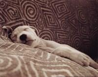 Dog Tired Fine-Art Print