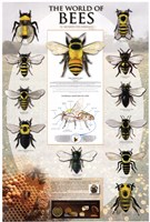 The World Of Bees Fine-Art Print