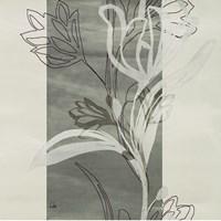 Petal Silhouettes 2 Fine-Art Print