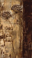 Sundew II Fine-Art Print