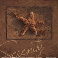 Serenity - starfish Fine-Art Print