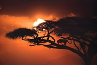 African Sky II Wall Poster