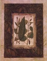 Leaf Study I Fine-Art Print