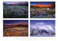Four Seasons Fine-Art Print