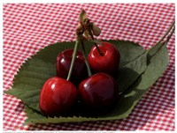 Morello Cherries I Fine-Art Print