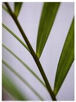 Fragile Green Fine-Art Print