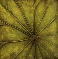 Palm Green Fine-Art Print