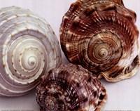 Spiral Shells Fine-Art Print
