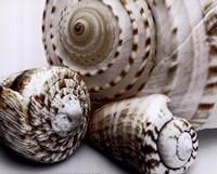Shell Collage Fine-Art Print
