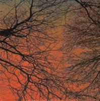 Sunset Forest III Fine-Art Print