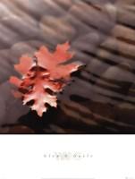 Leaves in Stream Fine-Art Print