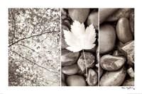 Nature Trio Fine-Art Print