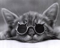 Cool Cat I Fine-Art Print
