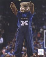 University of Kentucky Wildcats Mascot Fine-Art Print