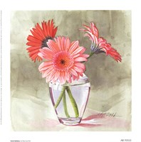 Coral Gerbera Fine-Art Print