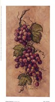 Vintage Grapevine l Fine-Art Print