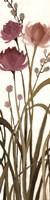 Floral Fine-Art Print