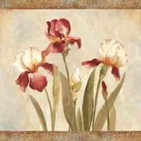 Iris Tapestry II Framed Print