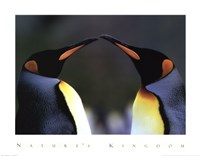 King Penguins Fine-Art Print
