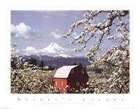 Blossoms Fine-Art Print