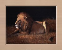 Lying Lion Fine-Art Print