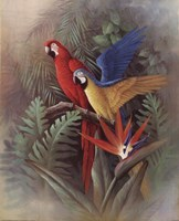 Exotic Birds Fine-Art Print