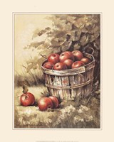 Barrel Apples Fine-Art Print