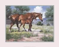 Horse and Colt Fine-Art Print