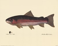 Steelhead Trout Fine-Art Print