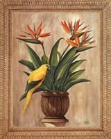 Bird of Paradise Fine-Art Print