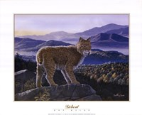Bobcat Fine-Art Print