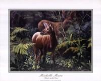 Black - Tailed Deer Fine-Art Print