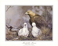 Golden Eagle Nesting Fine-Art Print