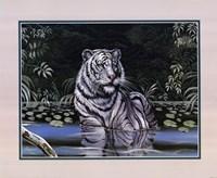 Wading White Tiger Fine-Art Print